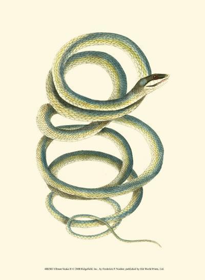 Vibrant Snake II-Frederick P^ Nodder-Art Print