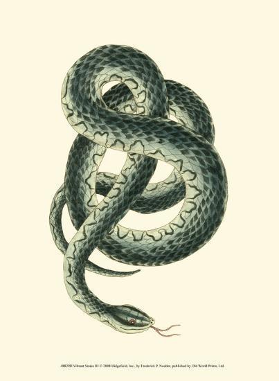 Vibrant Snake III-Frederick P^ Nodder-Art Print