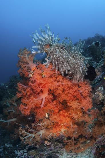 Vibrant Soft Coral Colonies Grow on a Reef in Lembeh Strait-Stocktrek Images-Photographic Print