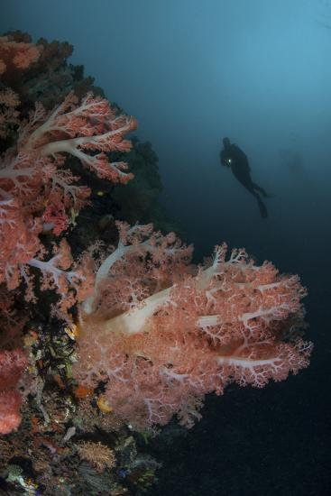 Vibrant Soft Corals Thrive on a Deep Reef in Indonesia-Stocktrek Images-Photographic Print