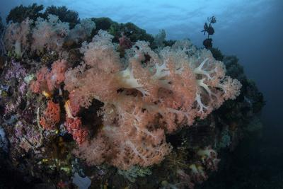 https://imgc.artprintimages.com/img/print/vibrant-soft-corals-thrive-on-a-deep-reef-in-indonesia_u-l-q12ss0g0.jpg?p=0