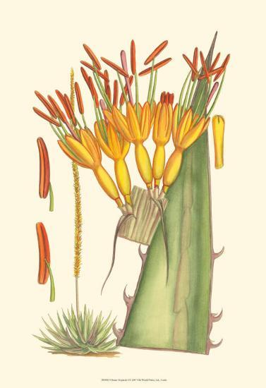 Vibrant Tropicals I-Samuel Curtis-Art Print