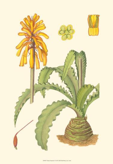 Vibrant Tropicals V-Samuel Curtis-Art Print