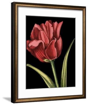 Vibrant Tulips IV-Ethan Harper-Framed Giclee Print