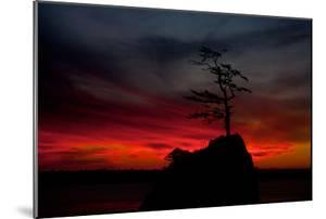A Lone Tree Protrudes from a Rock in Silhouette Against a Fiery Sunset Sky in Garibaldi by Vickie Lewis