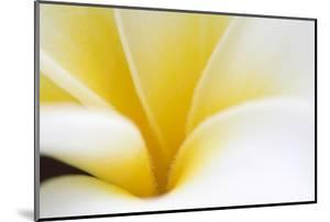 Abstract Close Up of the Petals of a White and Yellow Flower by Vickie Lewis
