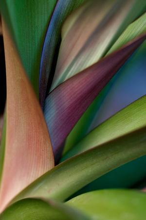 Abstract Floral of a Bird of Paradise Plant