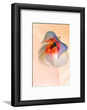 Abstract Floral Photograph of a Geranium Flower