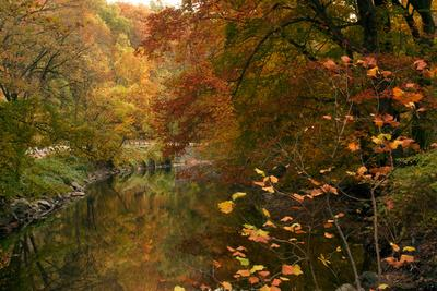 Trees in Fall Color Reflect on Rock Creek