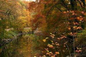 Trees in Fall Color Reflect on Rock Creek by Vickie Lewis