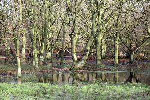 Flooded Trees by Victor De Schwanberg