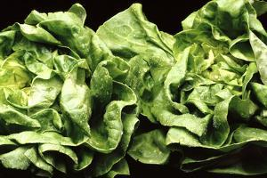 Lettuces by Victor De Schwanberg