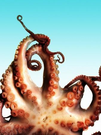 Octopus by Victor Habbick
