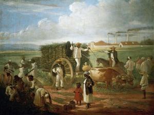 Cane Sugar Harvest in Cuba, 1874 by Víctor Patricio Landaluce