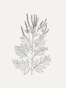 Wild Foliage Sketch II by Victoria Borges