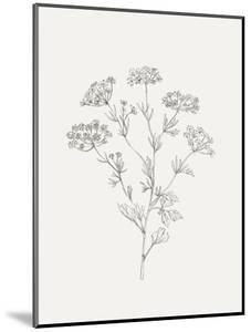 Wild Foliage Sketch III by Victoria Borges