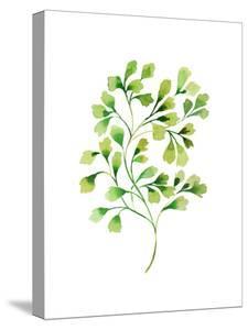 Tropical Leaf Fern by Victoria Nelson