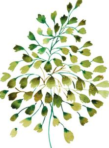 Tropical Leaf Maidens Hair by Victoria Nelson