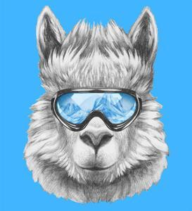 51d75b95d3 Portrait of Lama with Ski Goggles. Hand Drawn Illustration.