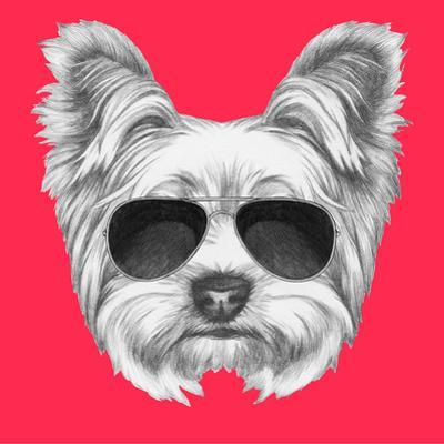 Beautiful Yorkshire Terrier Artwork For Sale Posters And Prints