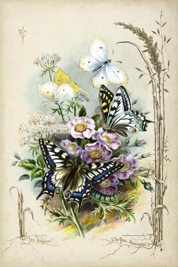 Victorian Butterfly Garden V-Vision Studio-Art Print