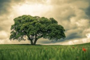 Tree in Field by VictorPeFotografia