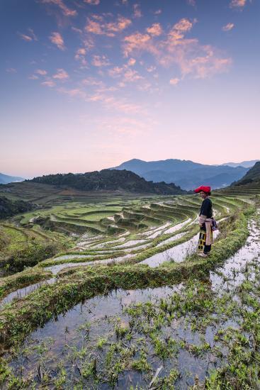 Vietnam, Sapa. Red Dao Woman on Rice Paddies at Sunrise (Mr)-Matteo Colombo-Photographic Print