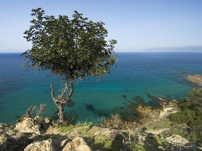 View Along Chrysochou Bay on North West Coast, Near Latsi, Cyprus, Mediterranean, Europe-Stuart Black-Photographic Print