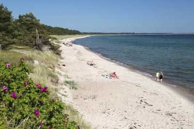 View Along Pine Tree Lined Beach, Nybrostrand, Near Ystad, Skane, South Sweden, Sweden, Scandinavia-Stuart Black-Photographic Print