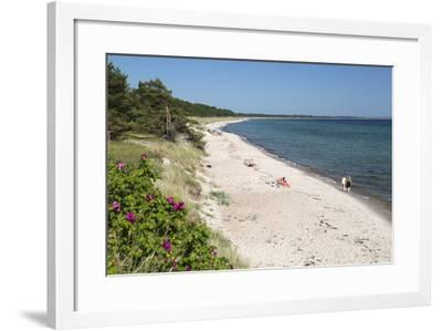 View Along Pine Tree Lined Beach, Nybrostrand, Near Ystad, Skane, South Sweden, Sweden, Scandinavia-Stuart Black-Framed Photographic Print