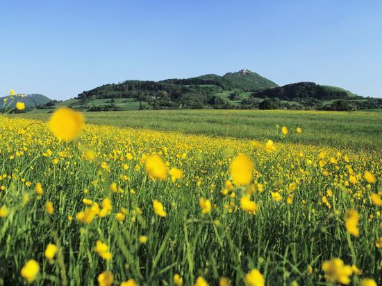View from a Flower Meadow to Teckberg Mountain with Teck Castle-Markus Lange-Photographic Print