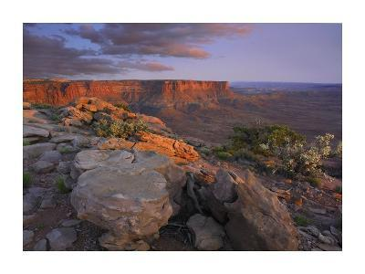 View from the Green River Overlook, Canyonlands National Park, Utah-Tim Fitzharris-Art Print