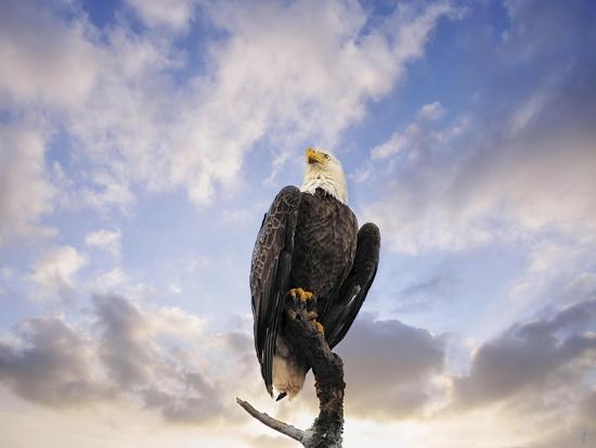 View from the Top Bald Eagle-Jai Johnson-Giclee Print