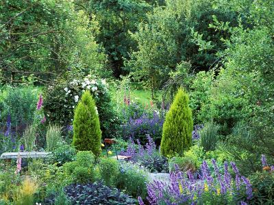 View into Country Garden with Perennials and Small Trees Summer-Lynn Keddie-Photographic Print