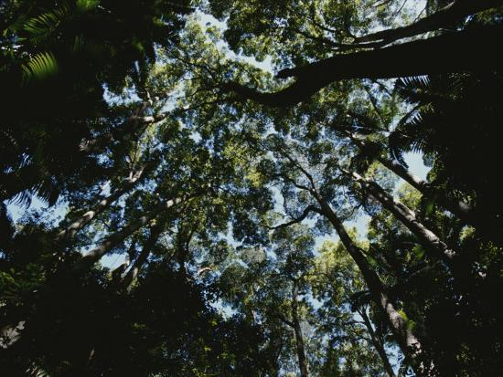 View Looking up into the Forest Canopy-Nicole Duplaix-Photographic Print