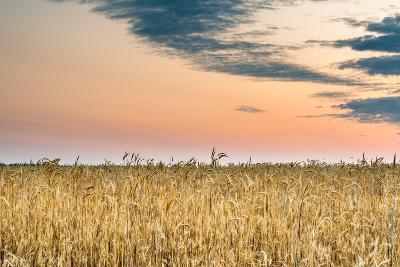 View of a Field of Wheat-Alexandr Savchuk-Photographic Print