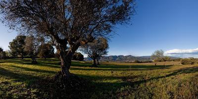View of a field, Santa Eulalia De Roncana, Barcelona, Catalonia, Spain--Photographic Print