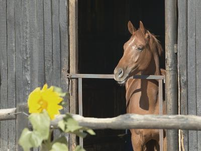 View of a horse in a stable--Photographic Print