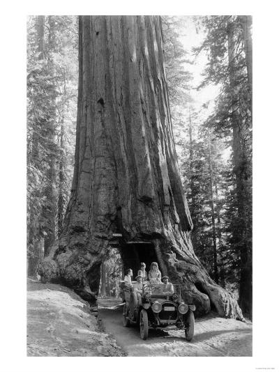View of a Loaded Model-T Ford under Wawona Tree - Redwood National Park, CA-Lantern Press-Art Print