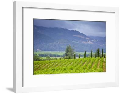 View of a Vineyard in Napa Valley, California-Mel Curtis-Framed Photographic Print