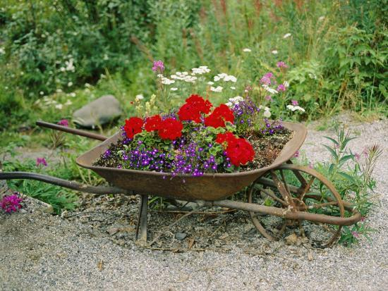 View of an Old Wheelbarrow Used for Summer Flowers-George F^ Mobley-Photographic Print