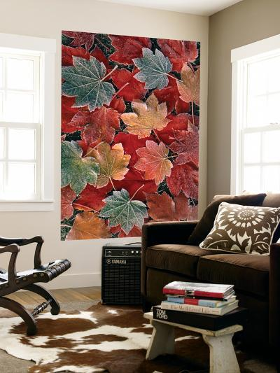 View of Autumn Maple Leaves, Oregon, USA-Stuart Westmorland-Wall Mural
