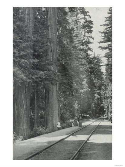View of Big Tree Grove Park - Santa Cruz, CA-Lantern Press-Art Print