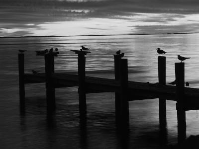 View of Birds on Pier at Sunset, Fort Myers, Florida, USA-Adam Jones-Photographic Print