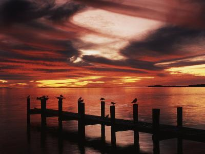 View of Birds on Pier at Sunset, Fort Myers, Florida, USA-Adam Jones-Photographic Print