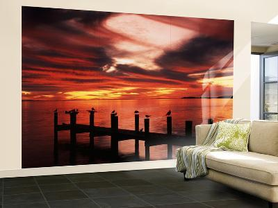 View of Birds on Pier at Sunset, Fort Myers, Florida, USA-Adam Jones-Wall Mural – Large