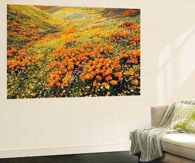 View of California Golden Poppy Flowers on Hill, Antelope Valley, California, USA-Stuart Westmorland-Wall Mural