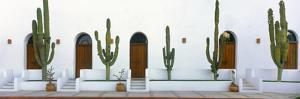 View of Cardon Cactus Plants Outside a Building, Todos Santos, Baja California Sur, Mexico
