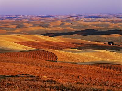 View of Colorful Palouse Farm Country at Twilight, Washington, USA-Dennis Flaherty-Photographic Print