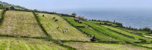 View of farmland along coast, Terceira Island, Azores, Portugal
